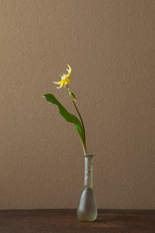 2012年5月22日(火) うつむく花はこちらの言葉を待っているような気がします。 花=黄花片栗(キバナカタクリ) 器=ローマングラス瓶(ローマ時代)