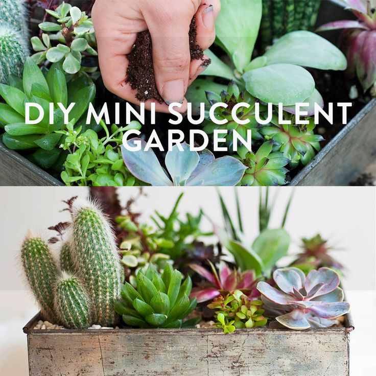 DIY Mini succulent garden from Tiny Tabletop Gardens by Emma Hardy.