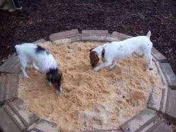 sandbox for digging dogs - Google Search | For the Home ...