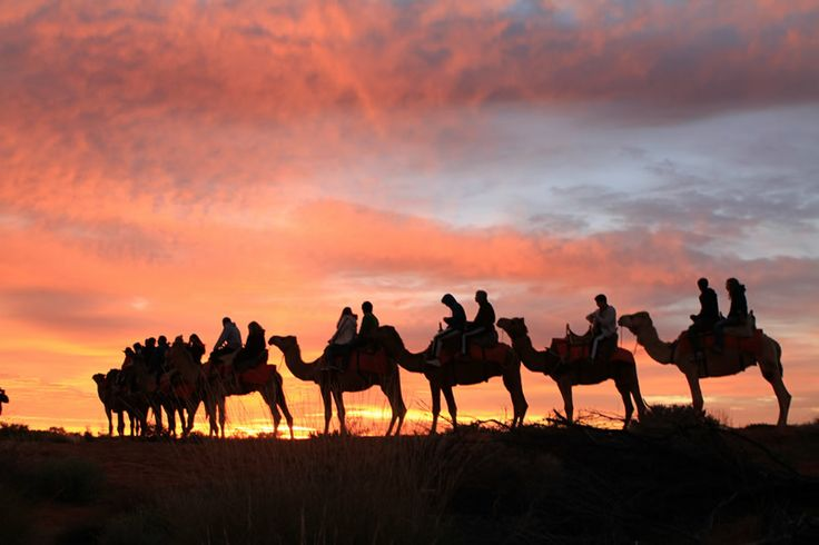 Australian desert landscape as dawn breaks over Uluru and Kata Tjuta. Ayers Rock Resort Uluru Camel Tours.