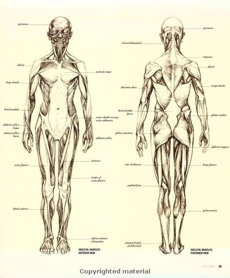 112 best Anatomy images on Pinterest | Anatomy reference, How to ...