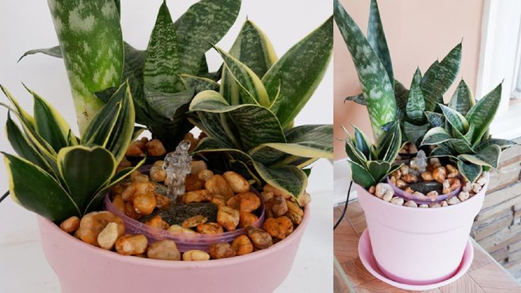 Diy pot fountain with snake plants sanseviera snake