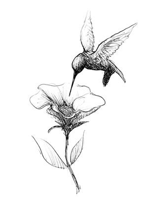 black and white hummingbird drawing - Google Search