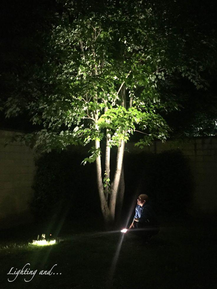 Lighting test for garden's illumination! #lighting #lightingand #luce #calda #project #prova #garden #giardino #milano #italy #project #progetto #illuminazione #illumination #esterno #outdoor #warm #proiettore #faretto #lampada #design #disegno #albero #tree