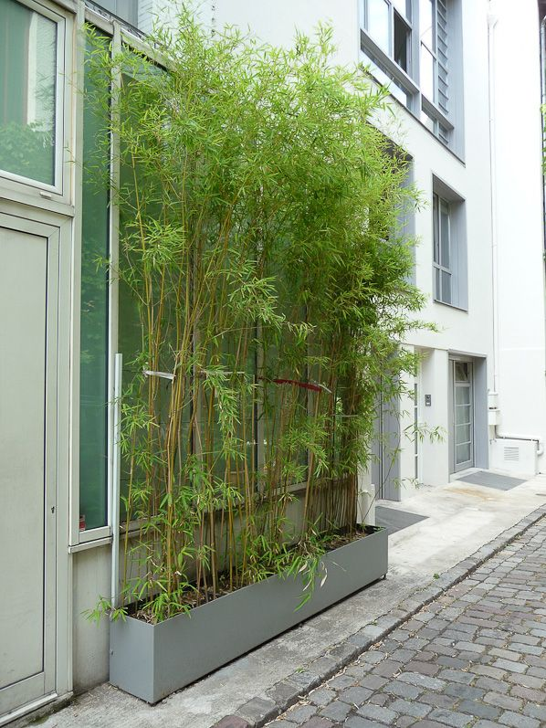 top 25 ideas about jardin potager on pinterest. Black Bedroom Furniture Sets. Home Design Ideas