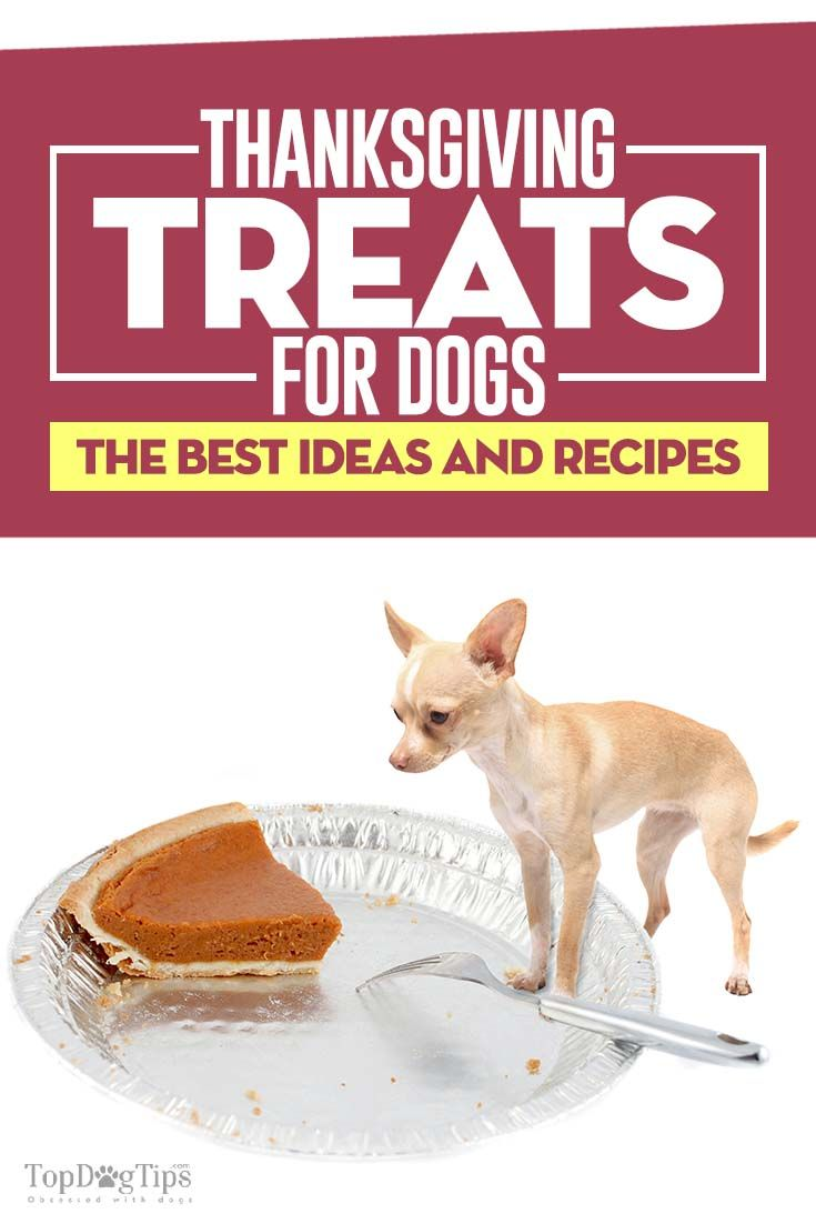 Best Store Bought Dog Food For Diabetes