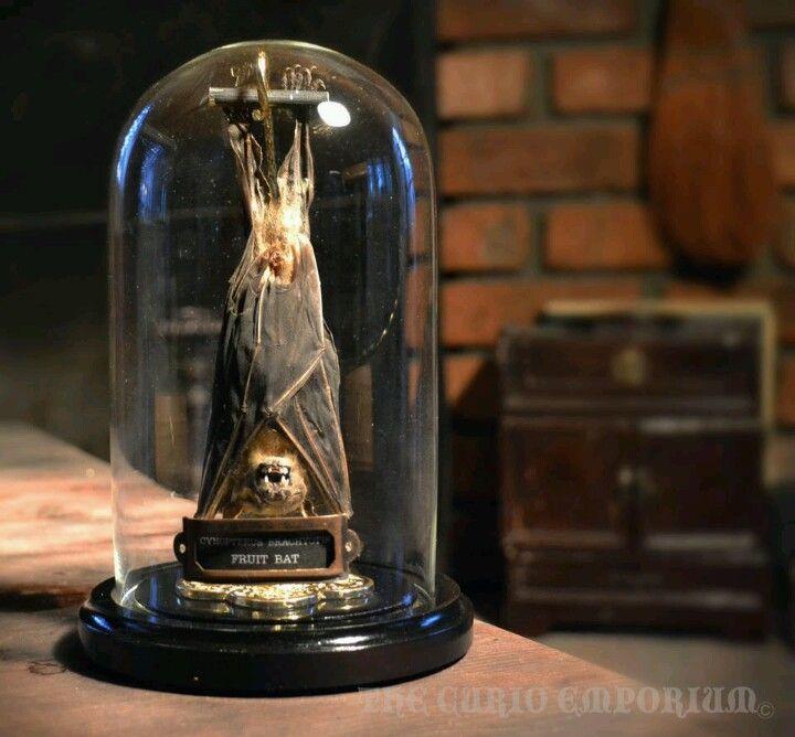WAS 95.00 Gothic Steampunk Victorian Taxidermy Sleeping Fuit Bat Dome