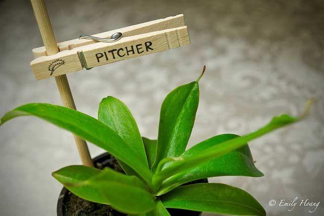 Pince à plantes                                                                                                                                                                                 Plus
