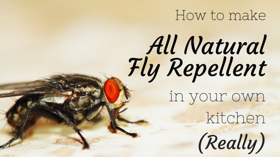 Tired of gross chemicals in your fly repellent? Me too. Want a natural alternative? Cool, I have one.  It's a dilemma we have every summer – do we suffer the flies or load ourselv…