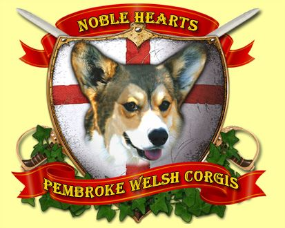 Noble Hearts Pembroke Welsh Corgi Breeder - SoCal