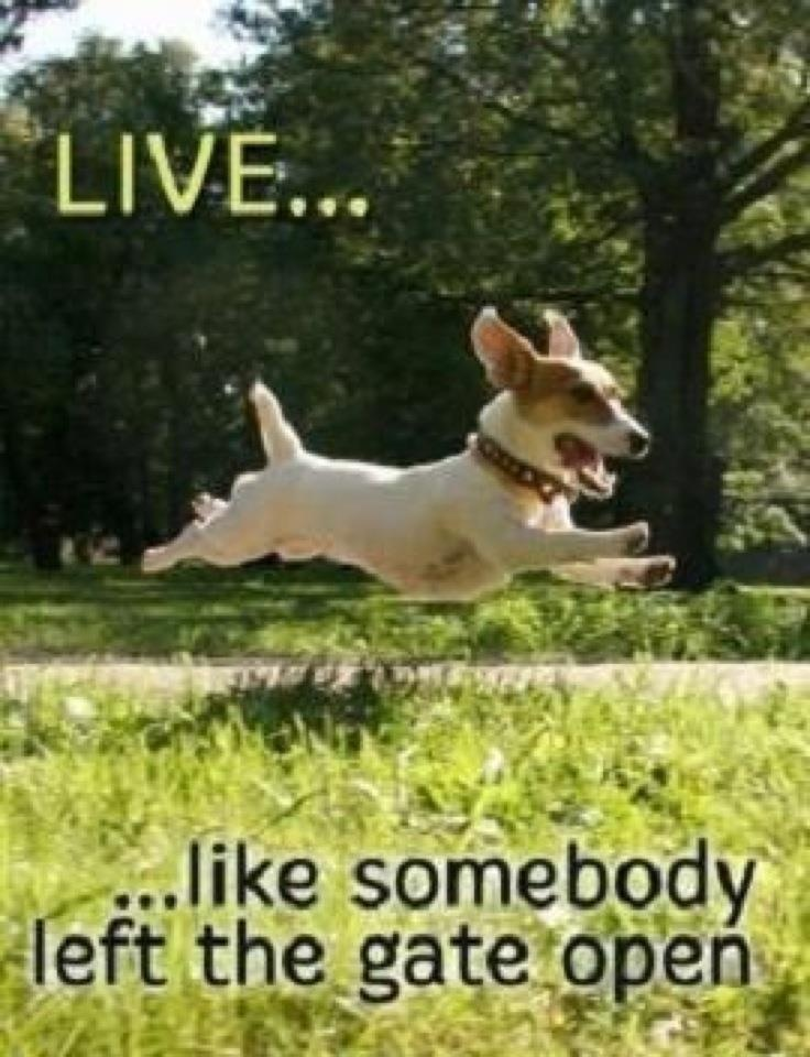 Love this!: Jack Russell, Inspiration, Quote, Puppys, Living Life, Happy Dogs, Gates Open, Smile, Animal