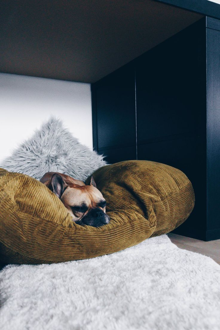 70 best imanii the dog collection images on pinterest badger closet storage and french bulldogs. Black Bedroom Furniture Sets. Home Design Ideas