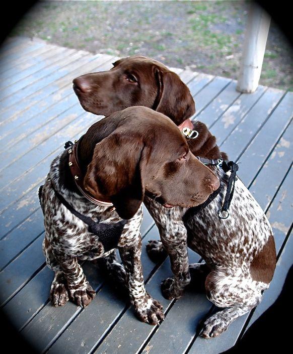 Archer & Marlowe