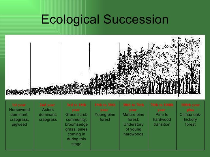 a study of ecological succession Ecological succession is the term used to describe what happens to an ecological community over time it refers to more or less predictable and orderly set of changes that happen in the composition or structure of ecological community when you are born, your learn to crawl, then walk and then run.