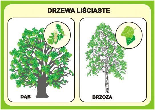 Las i ochrona środowiska, plansze - EUROtest
