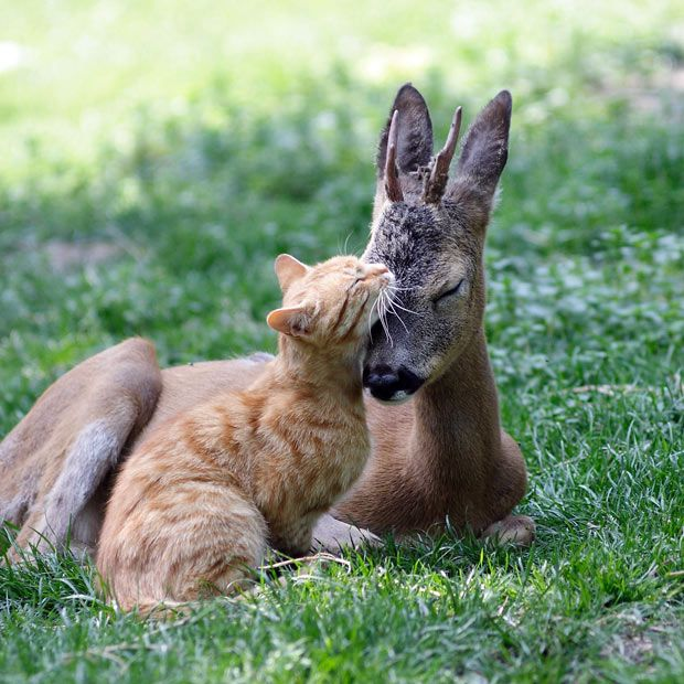 {best friends} a perfect moment in nature :  seen at Odessa Zoo, Ukraine