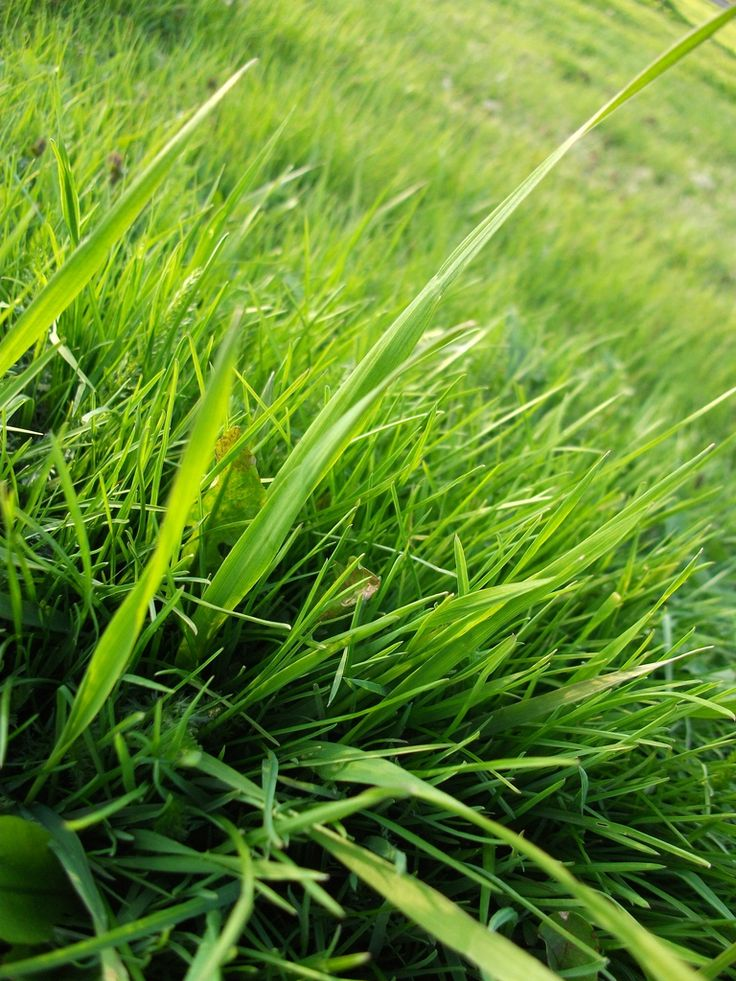 How To Kill Grass Naturally Unwanted In Your