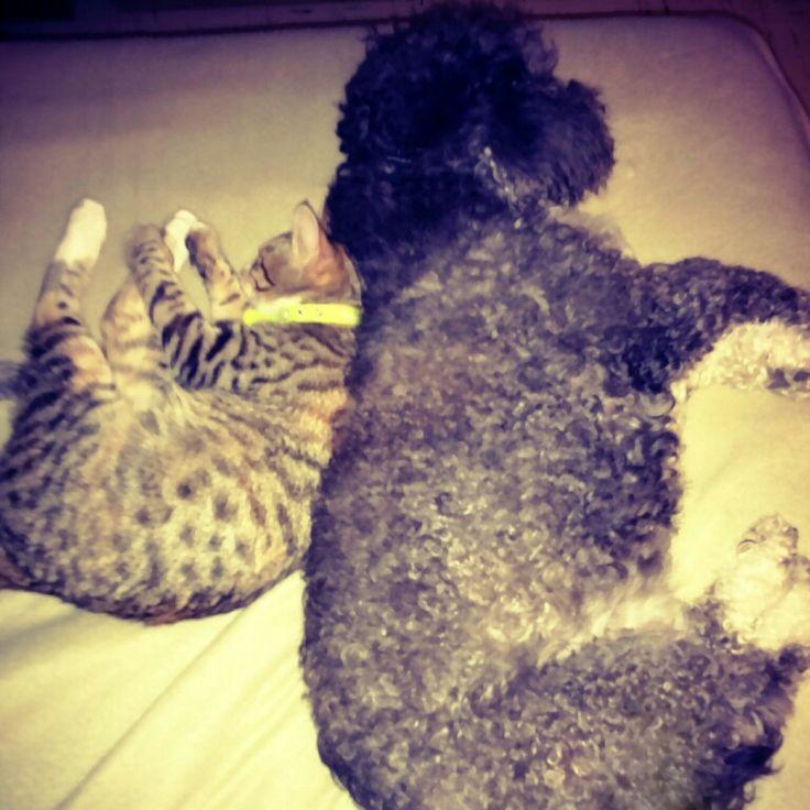 Sleeping together... #Milodon and #LaTobias
