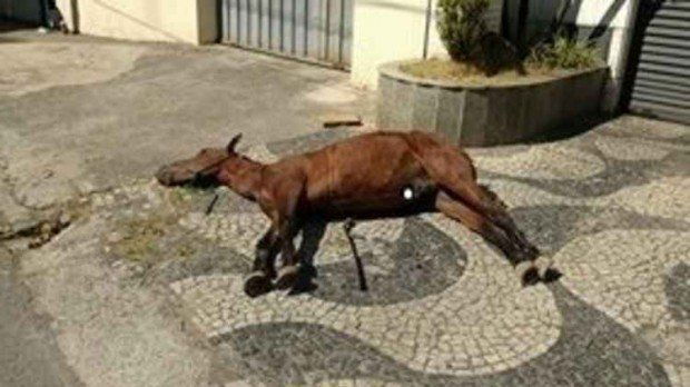 Petition · City Council: Animal Traction Prohibition in the city of Ipatinga / MG · Change.org