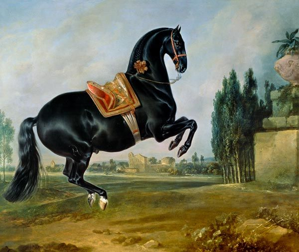 Johann Georg Hamilton - A black horse performing the Courbette, or Croupade