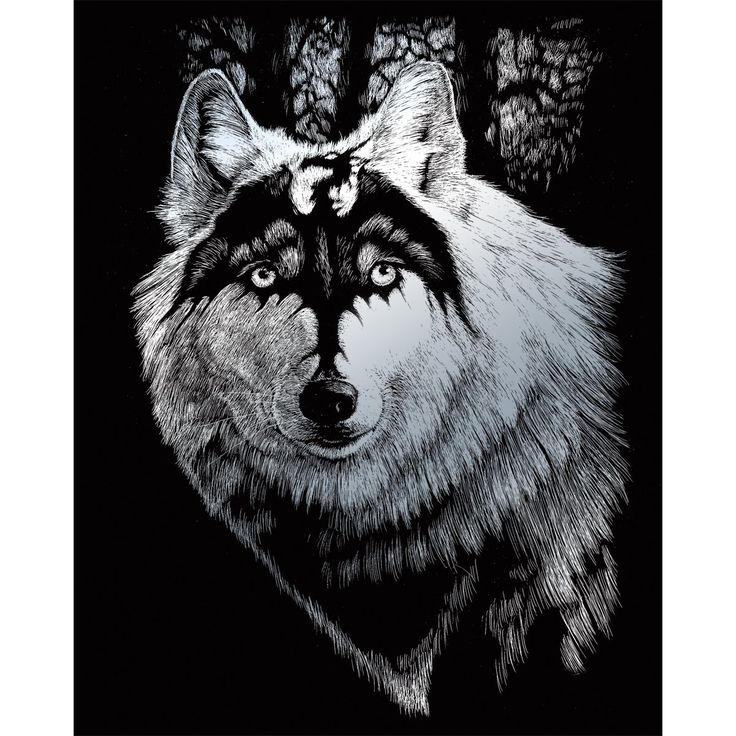 griffin Wolf - Google Search