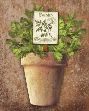 Potted Herbs III (Kate Ward Thacker)