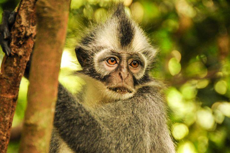Bukit Lawang, Gunung Leuser National Park, Sumatra, Indonesia, Indonesien