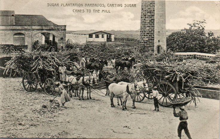 Barbados Genealogy Genealogy - FamilySearch Wiki