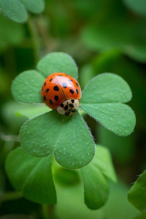bellasecretgarden:  Ladybug at Work by Ira Aschermair*(via Pin by Elaine Reinhold on A - In the Garden | Pinterest)