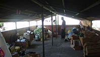 Samsun'un Çarşamba ilçesinde evinin çatısında Hint keneviri yetiştirdiği iddia edilen kişi, gözaltına alındı.