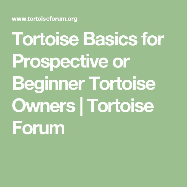 Tortoise Basics for Prospective or Beginner Tortoise Owners | Tortoise Forum
