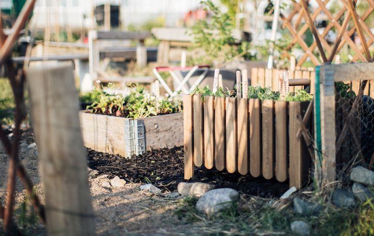 Finn ut hvordan du kommer i gang med din egen urbane hage