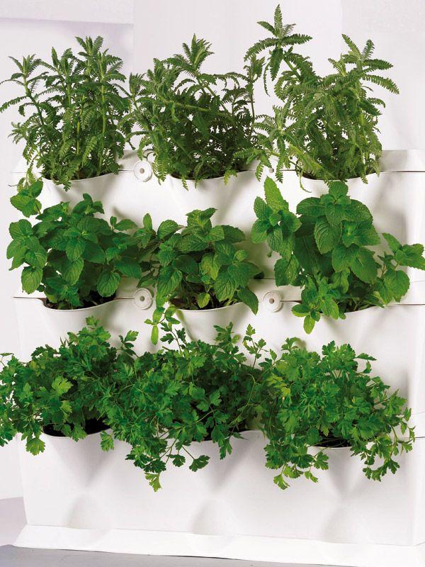 jardin vertical aromaticas