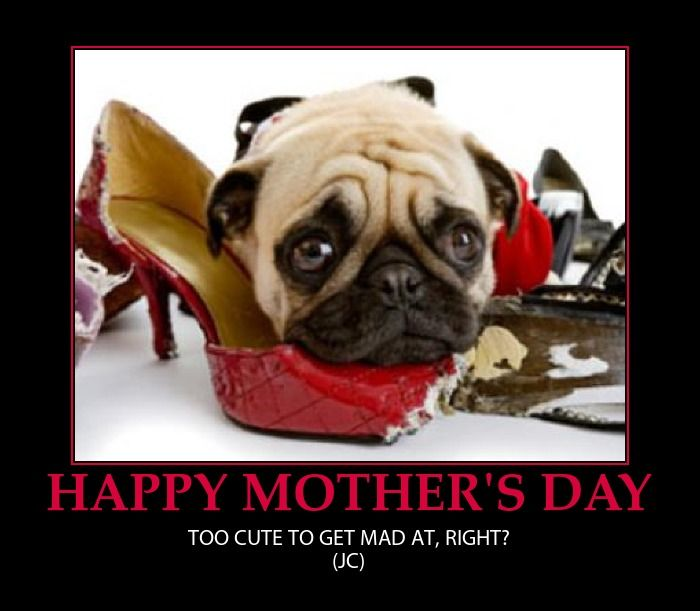HAPPY MOTHER'S DAY-CUTE DOG-FUNNY