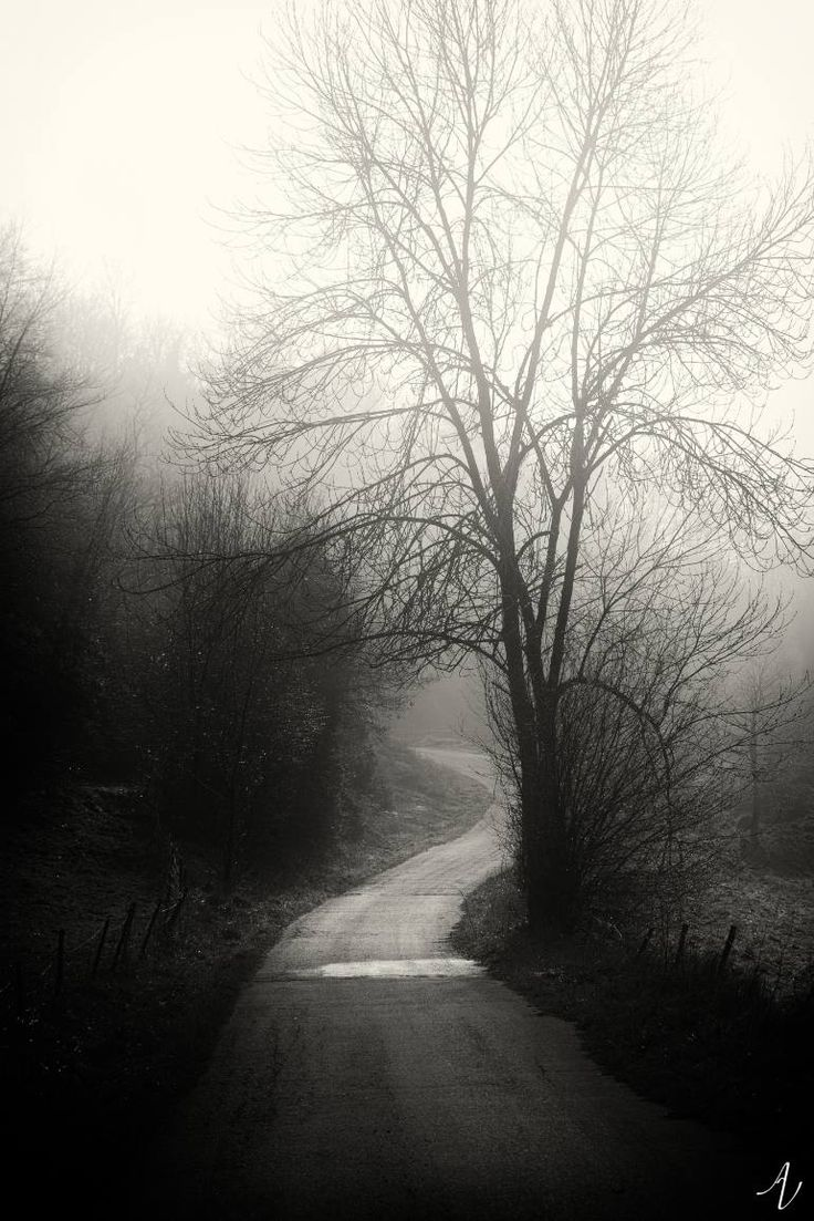 Road on a foggy day  Limited to 5 original prints; 4 available.  All photographies are titled, signed and numered on the back side.