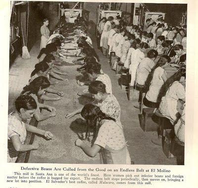 Café de El Salvador por National Geographic en 1944 | Beneficio el Molino, un enorme beneficio de café que por un momento fue el más grande del mundo