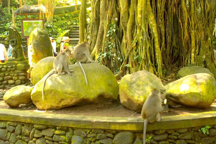 Garden area encompassed by Monkey Forest