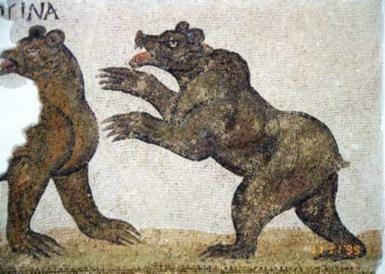 atlas bear