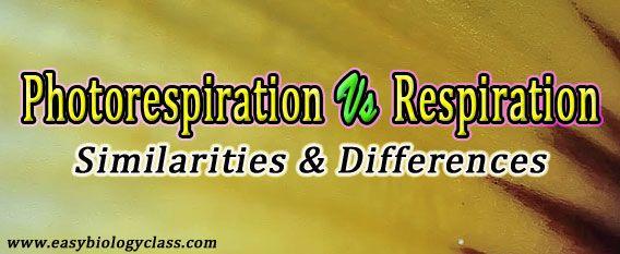 Photorespiration vs Respiration