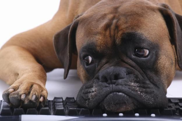 How to Bake Doggie Treats You Can Sell as a Home Business!