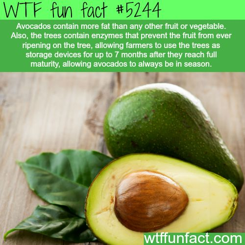 """Avocados facts - """"Always In Season?""""  ...Well, shouldn't it be cheaper?  ~WTF interesting & weird fun facts"""