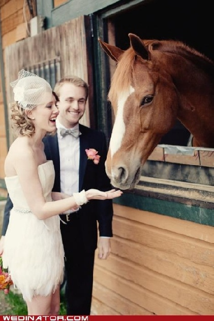 funny horse wedding gown