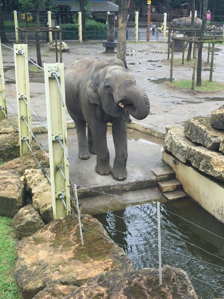 Elephant at Bellewaerde theme park