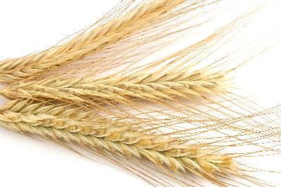 DIFFERENCE BETWEEN WHEAT ALLERGY & GLUTEN INTOLERANCE