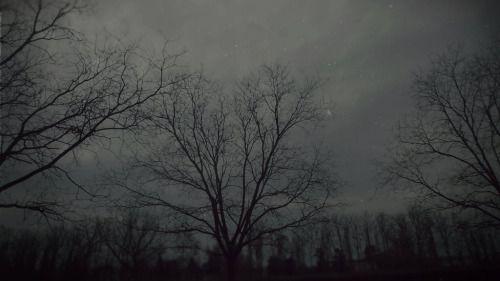 Cold wintry ash© ExilioSolitudine