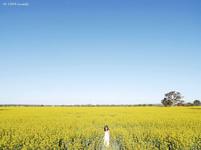 Canola Fields The Grampians Victoria, #Australia