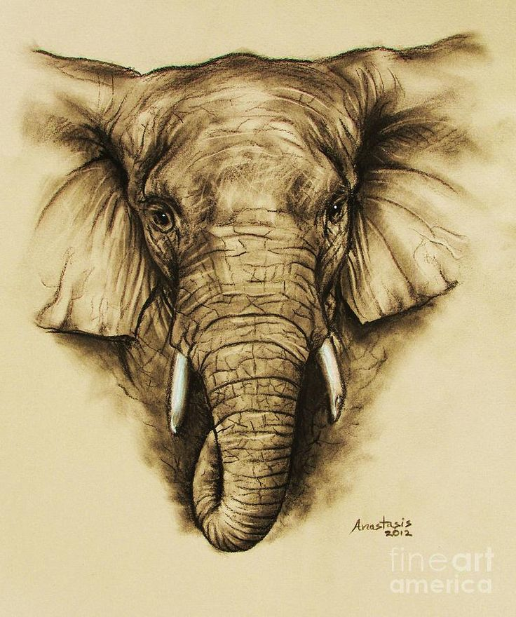 Elephant 2 Drawing