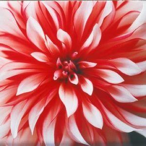 蜷川実花が旅先で出会った自然を撮影 新作写真展開催