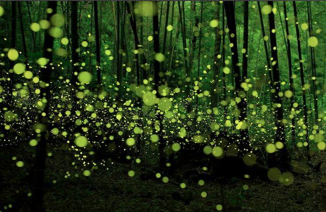 La magia delle lucciole negli scatti di Yume Ciano [Gallery]