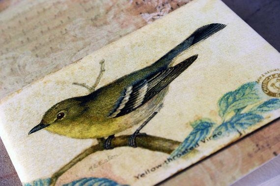 Yellowthroated Vireo journal songbird vintage style by GuBoArtBook,